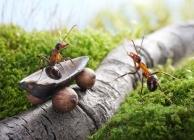 A hangyák csodálatos élete – Hangya mesék