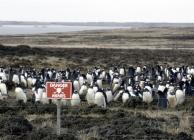 Archív fotók a 74 napos Falklandi háborúról