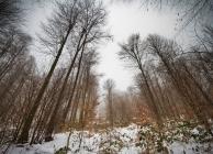 Börzsönyi tél