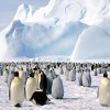 Egymást tartják melegen a császárpingvinek