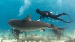 Michael Rutzen, the Sharkman