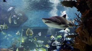 """""""Exploreres"""" kaland a cápák között"""