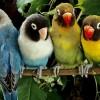 A madarak jóval több színt látnak, mint mi