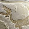 Bajorországban találták meg Európa legépebb dinoszaurusz-csontvázát