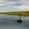 Az Amazonas esőerdői is felkerültek a Google Street View-ra