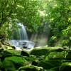 Még nagyobb veszélyben a trópusi biodiverzitás