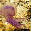 Medúza-előrejelzés a francia partokon