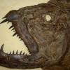 Ötvenmillió éves halszörny maradványait tárták fel