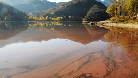 Toxikus algák szaporodnak a melegedő európai tavakban
