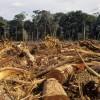 Csökkent az erdőirtás az Amazonas medencéjében