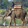 Rendszámot kapnak az elefántok