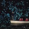 Kukacok világítanak egy új-zélandi barlangban