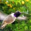Lenyűgöző képeket készít a kamerával felszerelt madáretető
