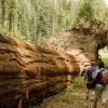 5 dolog, amit a fákért tehetünk