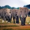 Vadállatles Afrikában – a kanapédról!