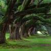 Haldokolnak a legnagyobb fák
