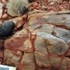 Felfedezték a legrégebbi fosszíliákat