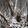 Kamerát helyeztek el egy rétisaspár fészkénél a Hortobágyon