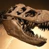 """A dinoszauruszok brit """"fővárosa"""" a Wight-sziget"""