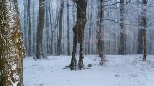 Nyomkeresés a havas Magas-Börzsönyben