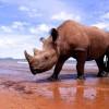 Rekordot döntött tavaly az illegális orrszarvúvadászat mértéke Dél-Afrikában