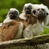 A majomjelölés veszedelmei, avagy a piton tojásrakása élőben