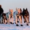 Ma indul az Iditarod!
