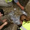 Négyezer éves csontvázat találtak Windsor mellett