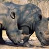 Vörös lista a veszélyeztetett ökoszisztémákról
