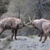 A kőszáli kecskék birodalmában – Gran Paradiso nemzeti park