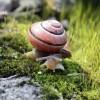 Csigák árulkodnak az emberiség vándorlásáról