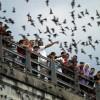 Hihetetlen: másfél millió denevér egy híd alatt