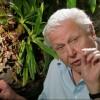 """David Attenborough szerint a popzene """"erősen szexuális"""""""