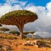A sárkányvérfa otthona: Socotra szigete