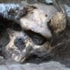 A grúz előember a Homo erectus fajához tartozott egy új kutatás szerint