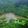 Új békafajokat és egy hárommilliméteres bogárfajt fedeztek fel Suriname-ban