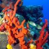 Szivacsok segítik a korallzátonyok fennmaradását?