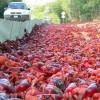 Hemzsegnek a vörös színű rákok Ausztráliában