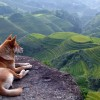 Mégsem Ázsiából származnak a kutyák?