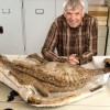 Bébi dinoszaurusz maradványaira bukkantak