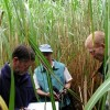 A fű lehet a következő bio üzemanyagforrás?