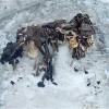Kiolvadtak az Alpok katonái