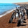 Pingvinfiókákat öl a klímaváltozás