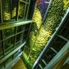 Színezd újra – A zöld 50 árnyalata