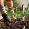 Mezőgazdaság újratöltve – Városi közösségi kertek nyomában