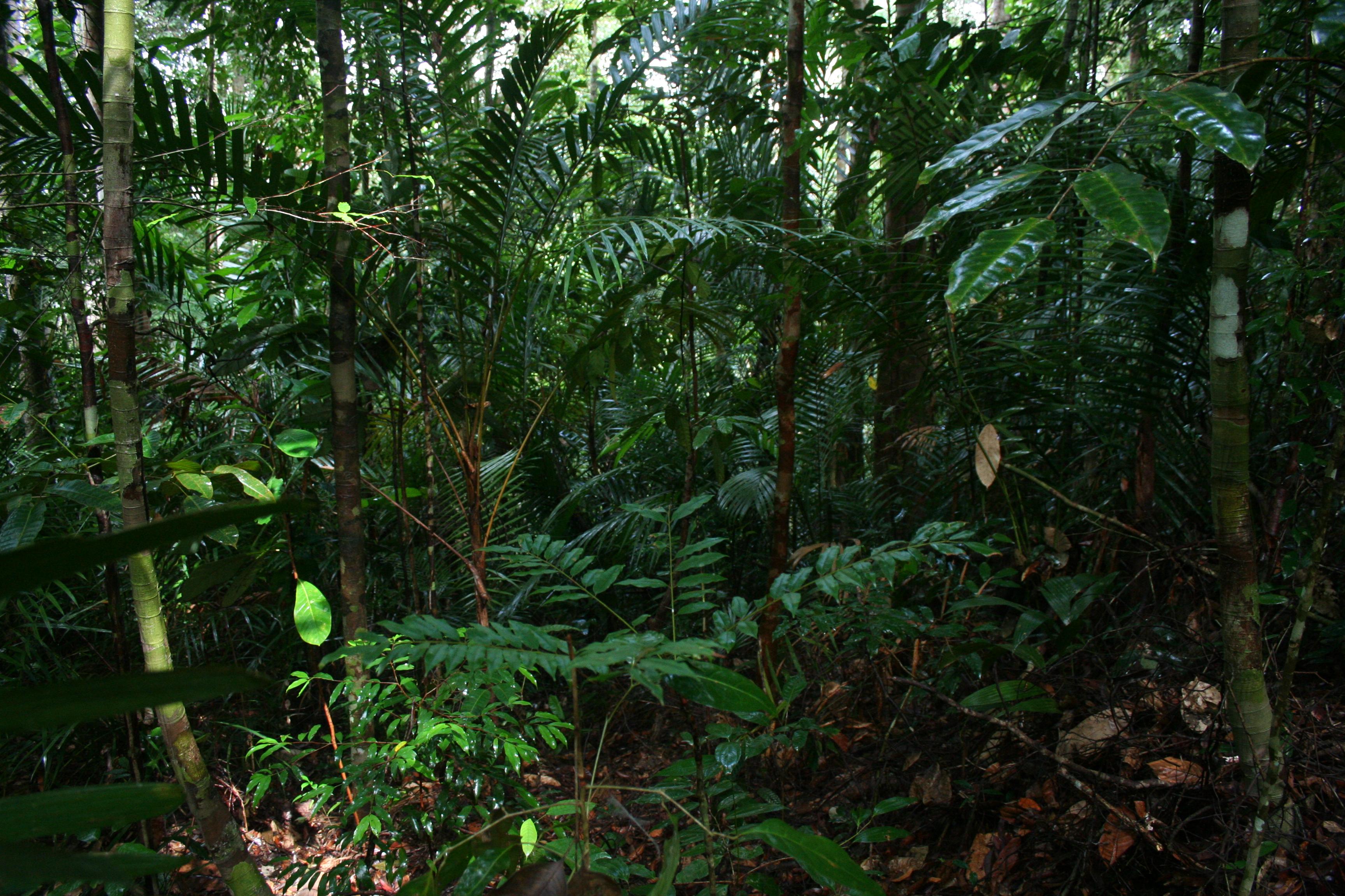 veletlenul-sajat-magat-kereste-a-no-a-dzsungelben-egy-csapat-turistaval