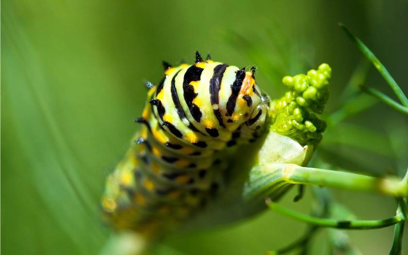 Barkács: Caterpillar Craft for Kids | Hogyan Kell | April