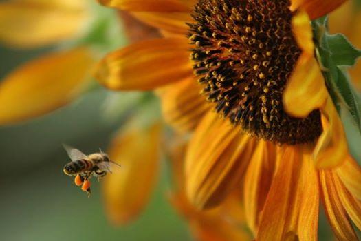 méhek4
